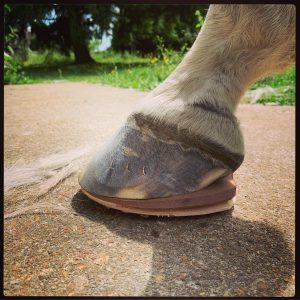 fer en bois et cuir pour cheval fourbu